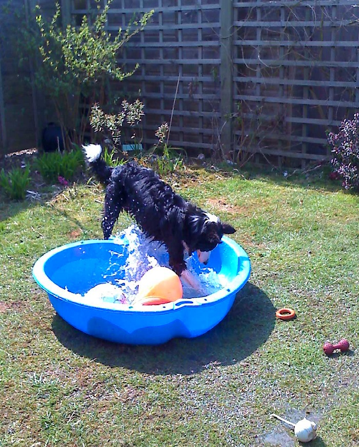 Skye_with_paddling_pool_small.jpg